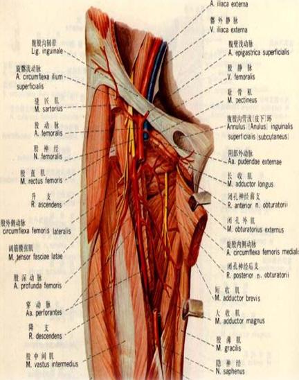 Femoral puncture site - Central venous catheter placement
