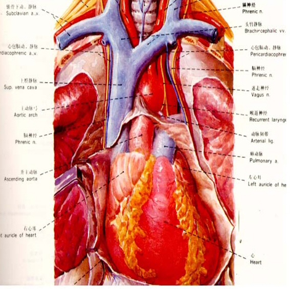 Jugular puncture site - Central venous catheter placement