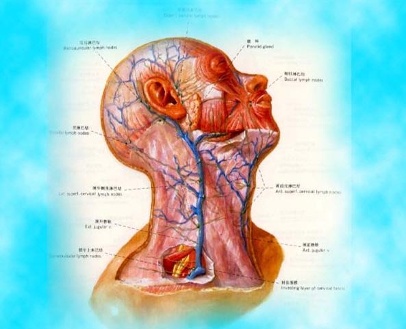 Subclavian puncture site - Central venous catheter placement